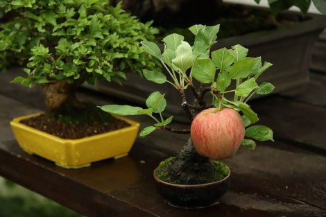 amazing-bonsai-trees-12-5710ed059e7f7__700