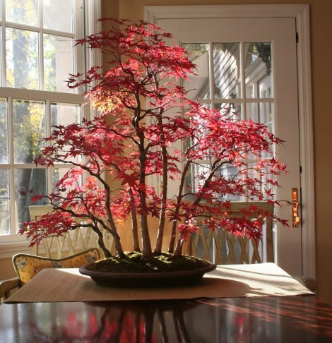 amazing-bonsai-trees-15-5710eeb31ea38__700