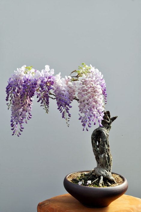 amazing-bonsai-trees-2-5710e785cd3a3__700
