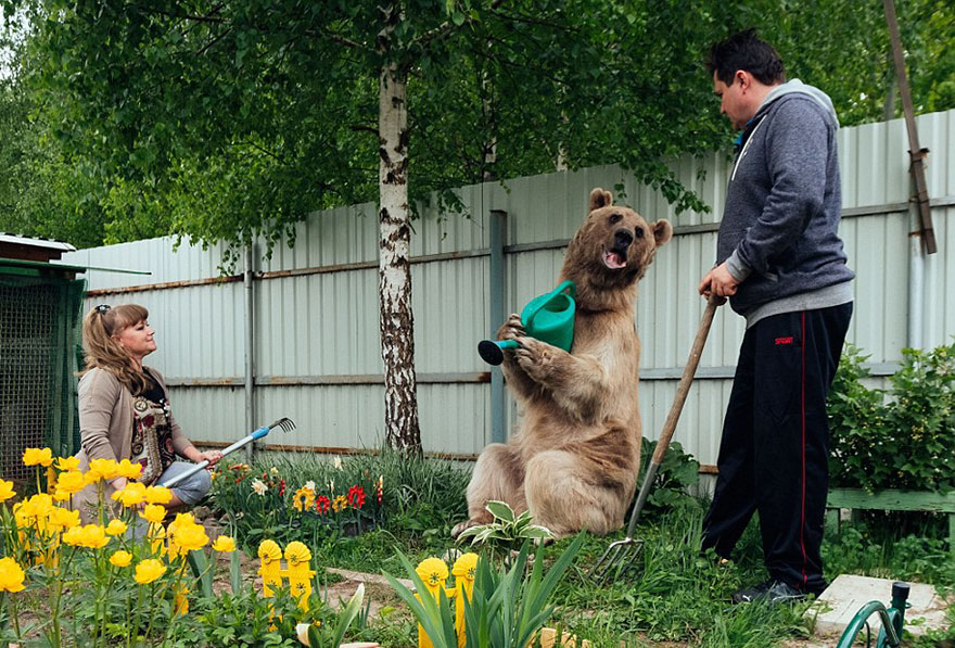 adopted-bear-russian-family-stepan-a16